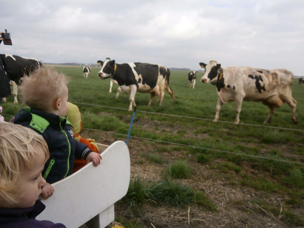 Kijken bij de Koeien